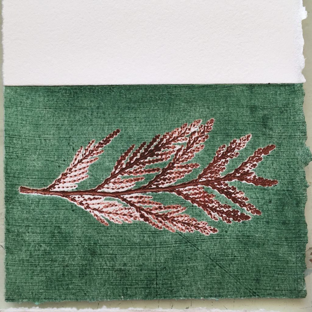 Monoprinted card with cedar front and textured plate, 2015