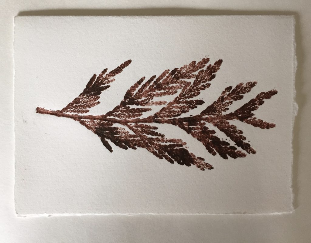 Monoprint with cedar frond, 2015